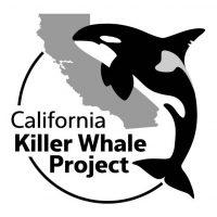 SJSU/MLML alumna Nancy Black establishes non-profit California Killer Whale Project