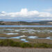 Ocean Protection Council awards $1.3 million in funding to support Elkhorn Slough restoration
