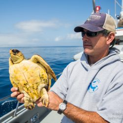 Virtual Seminar – From molecules to management: how stable isotope analysis can inform conservation planning for sea turtles – February 11th