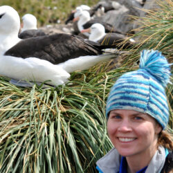 Virtual Seminar – Flying for free? Understanding the role of wind variability in albatross foraging energetics – November 4