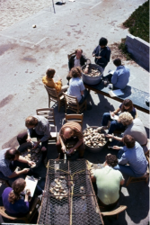 Counting clams at MLML; 11 Jun 1975. Dr. Nybakken seated at top of photo, Vidya Narine at very top of photo, Andrea (Purdue) McDonald (with clipboard) seated on bench by coffee cups, Terry Eckhart (yellow shirt), Kathy Casson (blue shirt lower left), Mark Stephenson (blue shirt, extreme right), Jim Barry (curly blond hair, Lynn Krasnow (seated to Jim's right recording data). We can't ID the others.